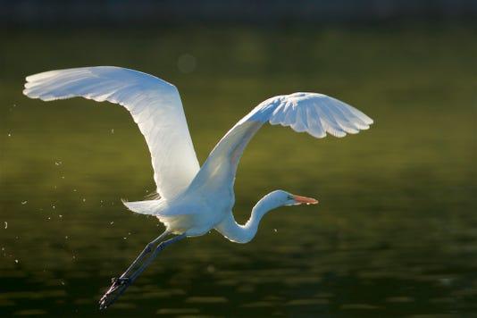 Sunnylands Bird