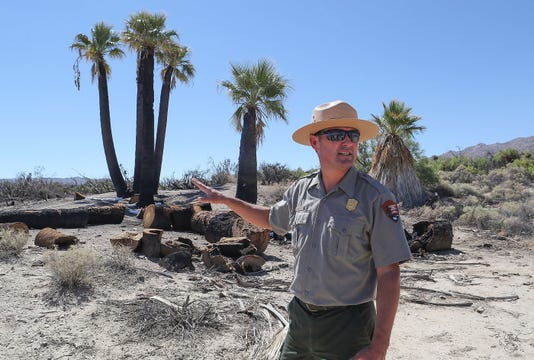 After Arson Joshua Tree National Park Plans Future Of Oasis Of Mara