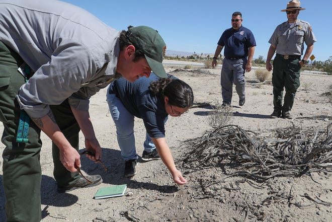 Sarah Bliss, center, theCultural Resource Manager at 29 Palms Band of Mission Indians and Jason Theuer, left, of Joshua Tree National Park easily find ancient arrowheads and pottery fragments at the Oasis of Mara in Joshua Tree National Park, August 31, 2018.