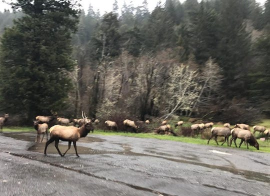 Scenes like this elk crossing made life on the road irresistible.