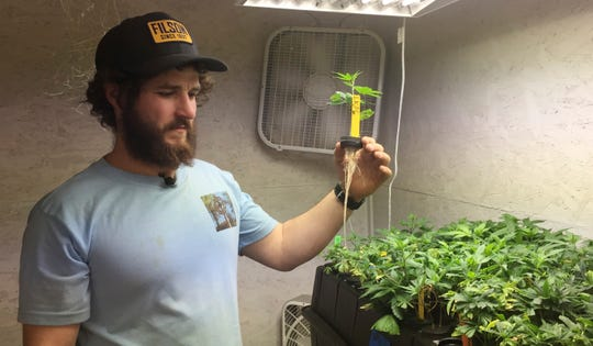 In this April 5, 2017 file photo, Matthew Miller of Millerville Farms looks over a marijuana seedling in Cave Junction, Ore. Oregon will require cultivators growing outdoor marijuana for general use to notify the state when they plan to harvest. The new harvest notification policy, which takes effect Saturday, Sept. 1, 2018, is the first of its kind among states that have legalized marijuana and is intended to ensure legally grown Oregon weed isn't being transported out of state.