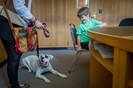 Child volunteer Gideon Stevenson, 5 meets Lilly Mae, left as her trainer Shaney Starr observes in a Marion County juvenile courtroom Tuesday August 28, 2018. The visit was so Lilly Mae could make one more training visit before her official swearing-in ceremony on Sept. 6. The rescued boxer is about to become Oregon's first CASA therapy dog, providing comfort to foster children during court proceedings. Lilly Mae was rescued and trained by CASA executive director Shaney Starr. The child volunteers played the role of kids who would be attending a juvenile court proceeding so Lilly Mae could learn the surroundings and process of going to court in a support capacity.