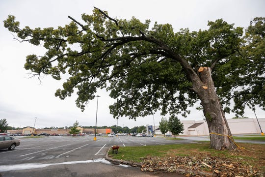 This is one of two bur oak trees that are more than 150 years old at the South Oaks Center. The trees are being removed due to lightning strikes.