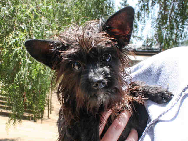 Sergeant is a 1-year-old terrier mix. He is friendly with everyone and is equally happy on your lap or playing. He is neutered and ready to go home. For no apparent reason, people have been passing him by since May. The shelter staff is not sure why because he's a great little dog. You can meet Sergeant at the Humane Society of Ventura County in Ojai. His adoption fee of $120 includes neuter, vaccinations, free veterinarian check, microchip implantation and a new best friend. For more information on Sergeant or other available animals or to volunteer, please call 805-646-6505 or visit www.hsvc.org. The shelter is located at 402 Bryant St., Ojai. Hours are 10 a.m. to 6 p.m. Monday through Saturday.