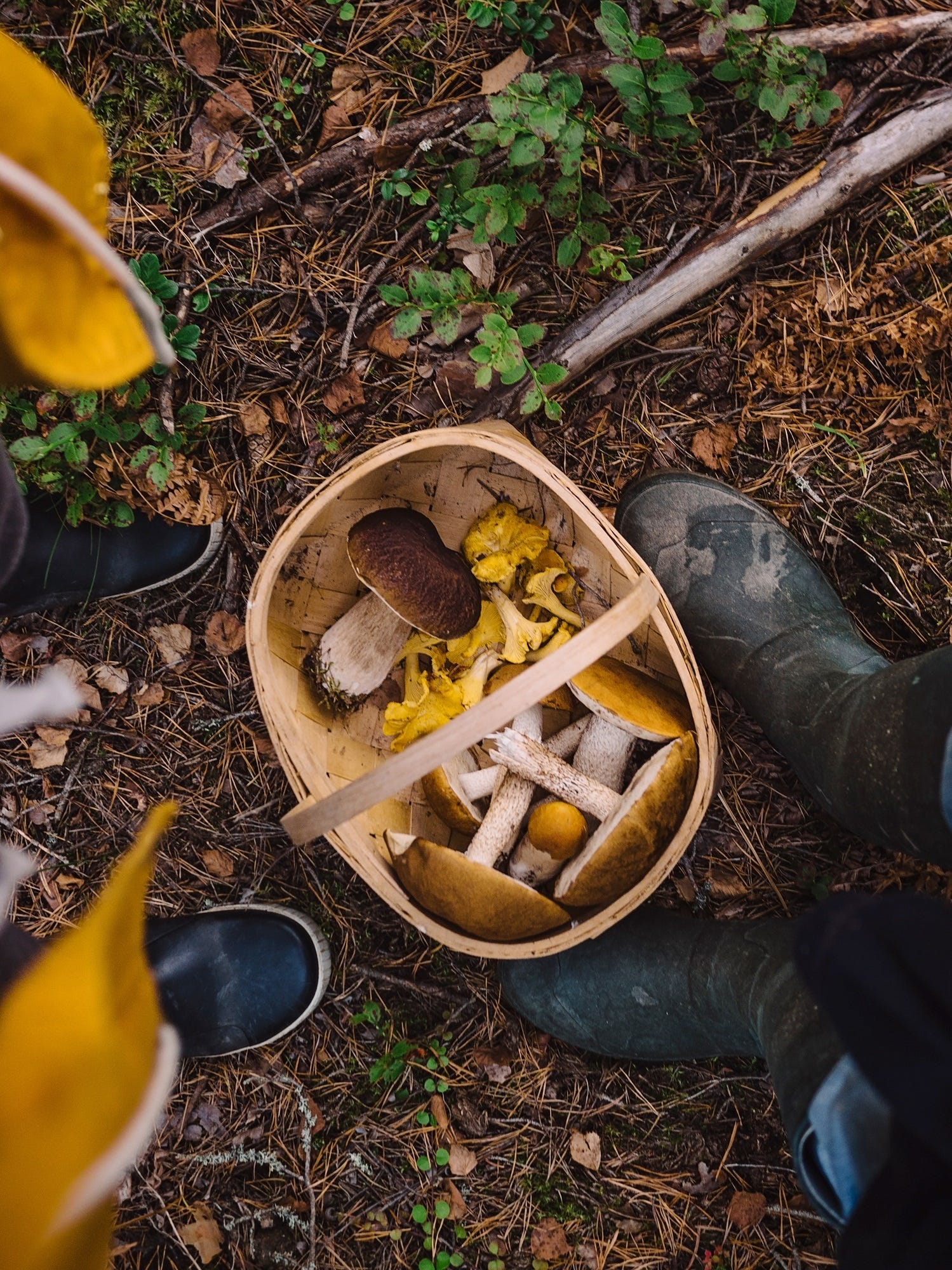 Harvesting wild mushrooms has become part of the culture in Finland.