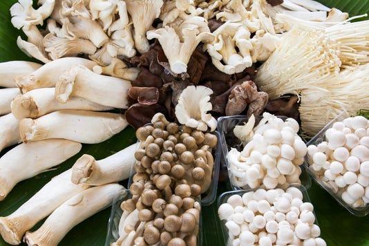 Variety Of Mushrooms Background