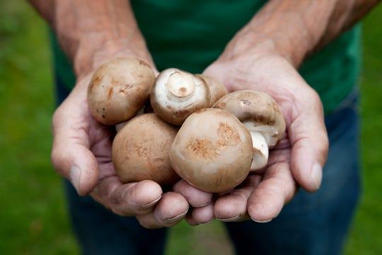 Mushrooms have genetic similarities to humans.