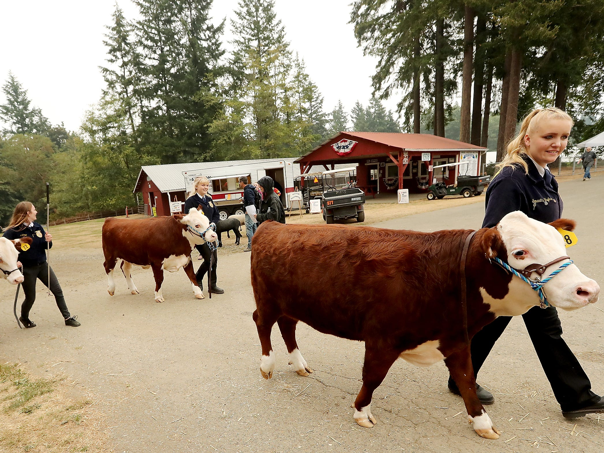 South Kitsap FFA members (left to right) AJ Shipp with steer Tucker and Chelsea Hughson with steer Champ and Samantha Hughson with steer Harold, walk back tot he barn after the livestock auction at the Kitsap County Fair & Stampede on Saturday, August 25. 2018.