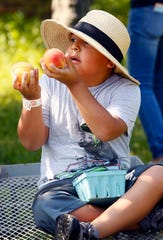 8-year-old Andy Salas of Brooklyn at Alstede Farms in Chester. August 24, 2018, Chester, NJ