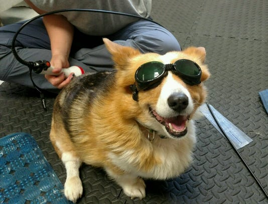 Tulip Therapy Dog Laser Goggles 1