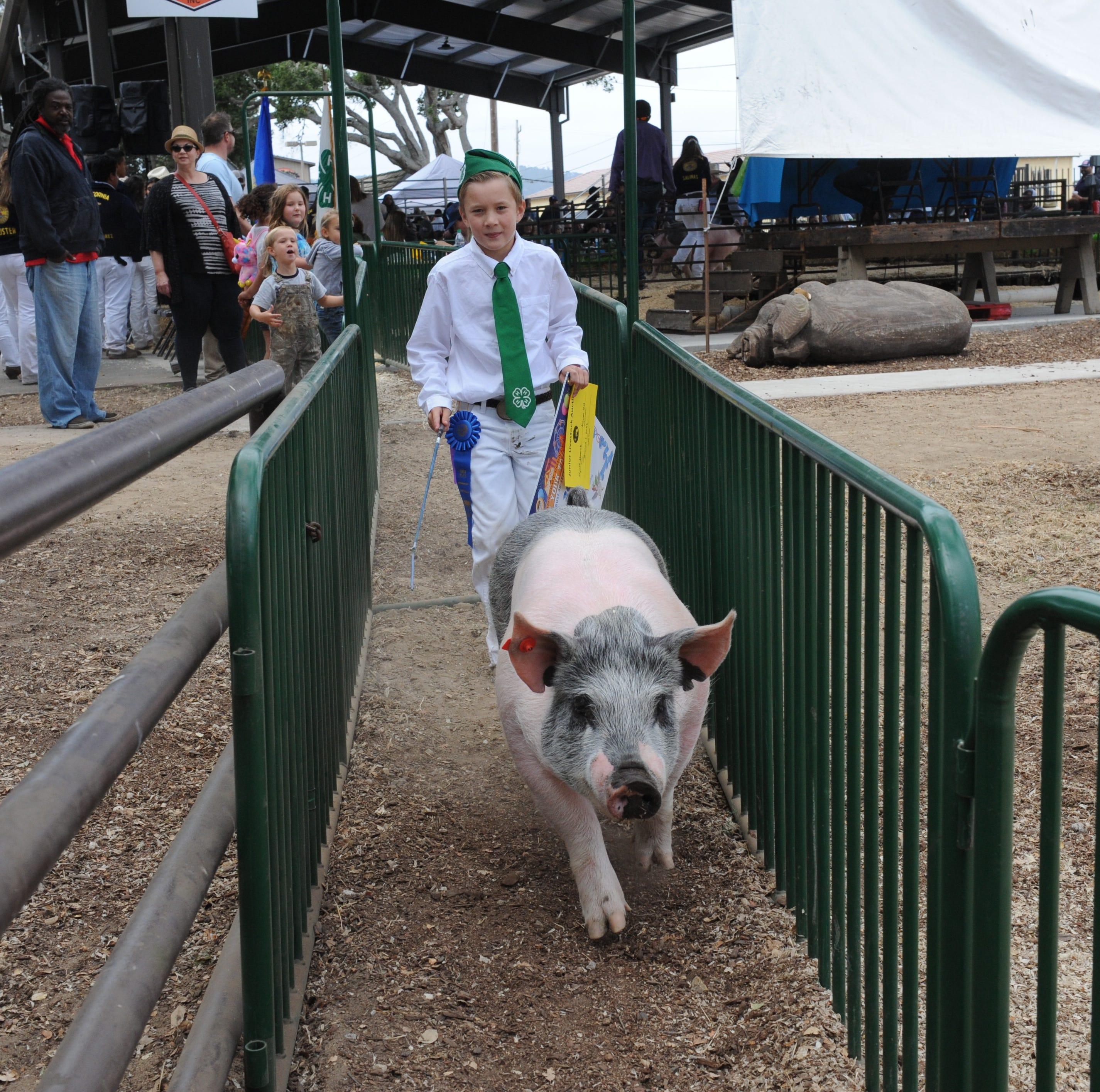Aspiring farmers showcase at Monterey County Fair junior livestock auction