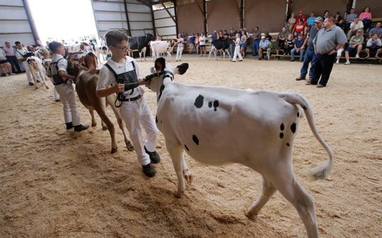 Future farmers parade their animals during the showmanship competition Sept. 1, 2018, at the Sheboygan County Fair in Plymouth.