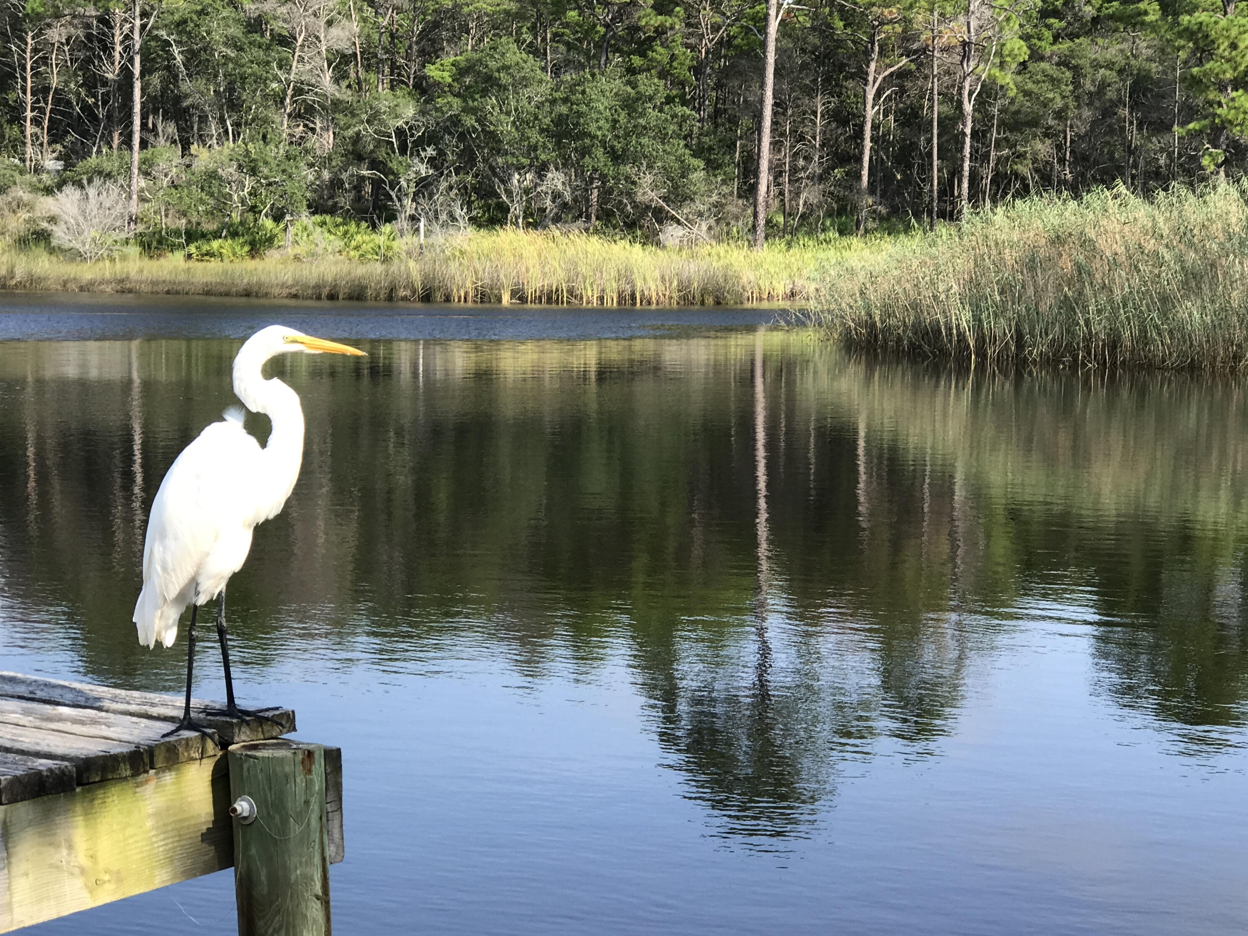 Sittin' on the Dock of the Bay: Taken at a gulf coast tidal pool