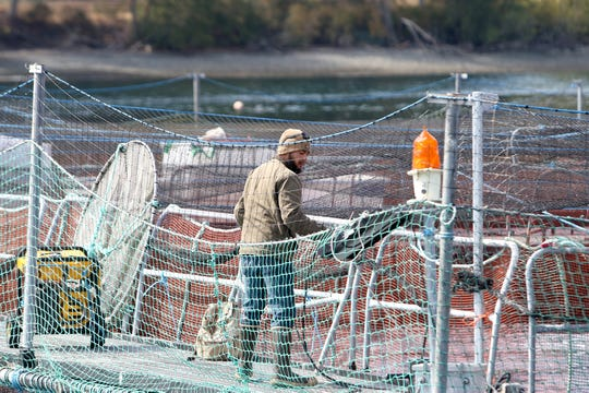 An employee works at one of the net pens in Rich Passage in August 2018. Cooke Aquaculture has been sued by environmental groups who contend fish farming is detrimental to the habitat of Puget Sound.