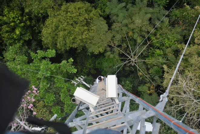 During the research project, Pau and her team had a panoramic view of the forest canopies.