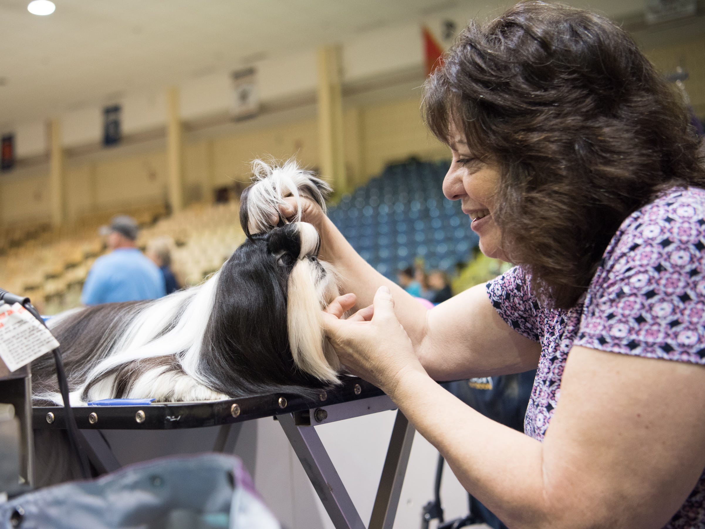 Eileen Nicholas grooms her Shih Tzu at the Sussex Hills Kennel Club 57th dog show in the Mennen Area in Morristown, NJ on Sept. 2, 2018.