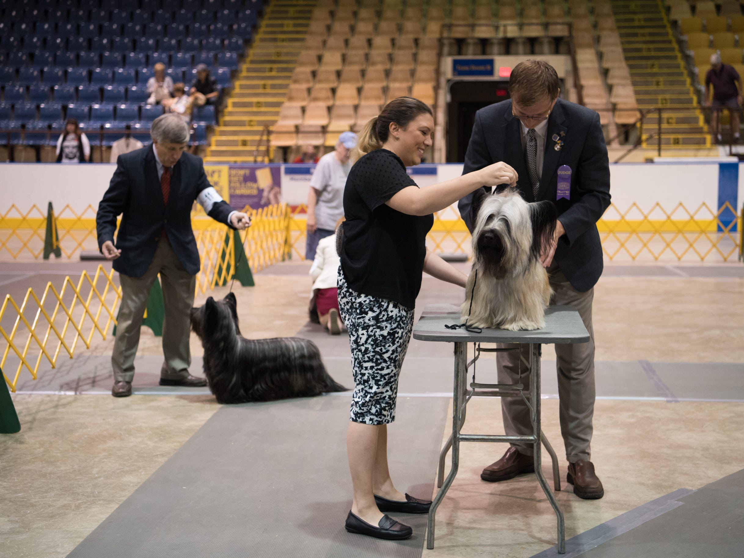 Dogs competing in all-breed dog show