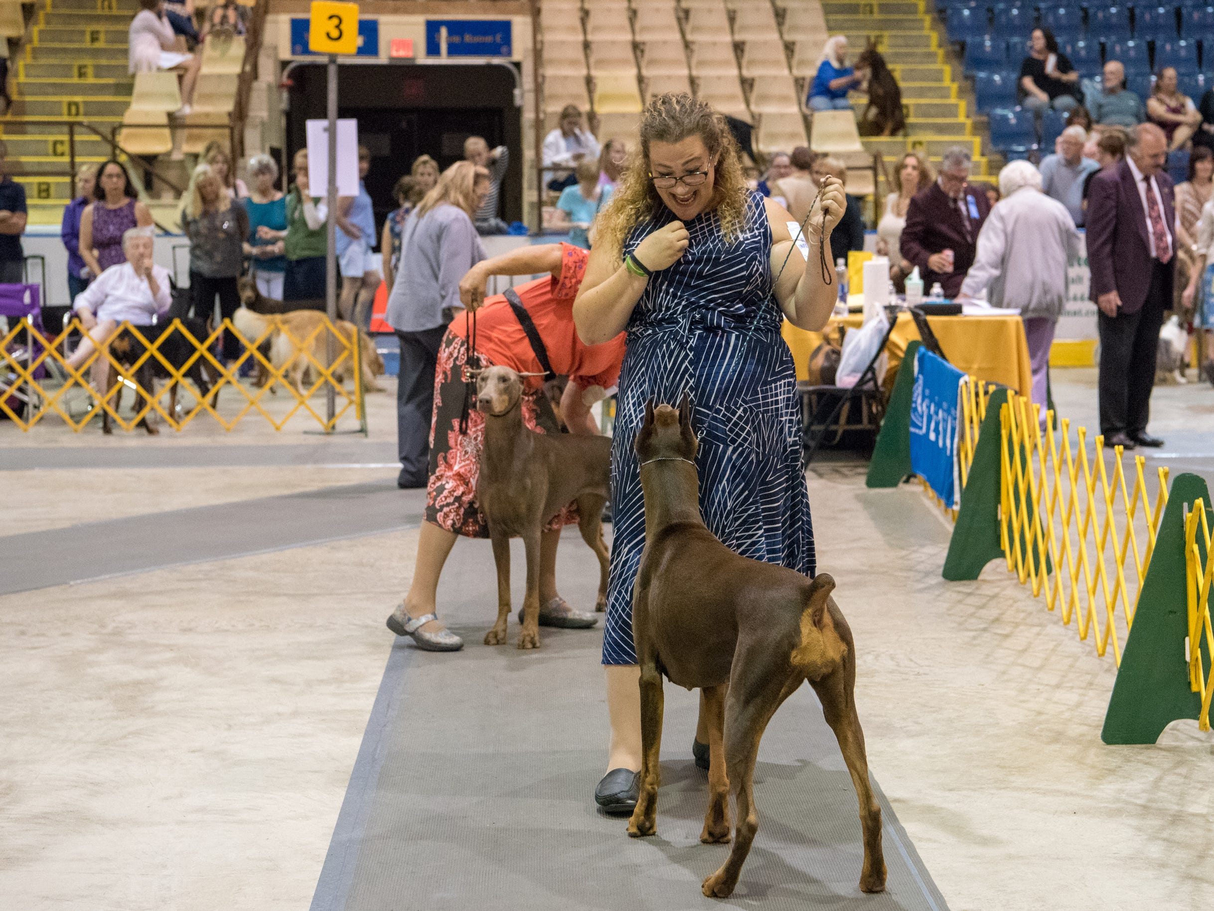 Handler Carissa DeMilta-Shimpeno gets the attention of her Doberman Pinscher during the Sussex Hills Kennel Club All-Breed Dog show in Morristown, NJ on Sept. 2, 2018.