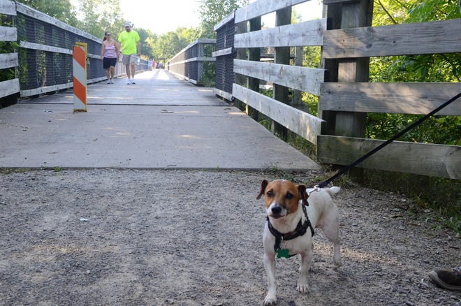 Dozer, a Jack Russel terrier, accompanies his owner Larry Dailey on the 2018 Trek the Trestle walk on Sept. 3, 2018, in Avoca, Michigan.