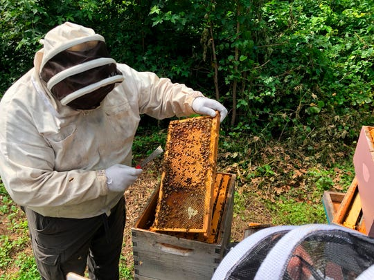 In this June 28, 2018 photo, John Ferree inspects a screen from the hives he cultivates at the Mount Vernon Estate in Mount Veron, Va. Ferree is the apiarist for the colonies at Mount Vernon and the Kennedy Center.