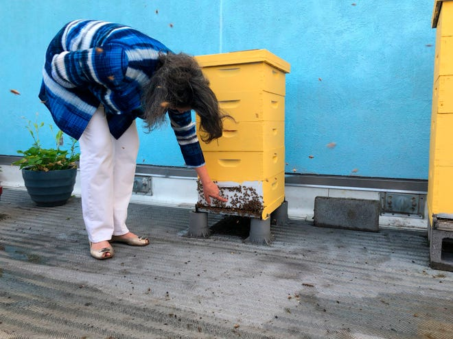 In this June 27, 2018 photo, Toni Burnham, president of the D.C. Beekeepers Alliance, inspects a rooftop hive at the Fairmont Hotel in Washington.