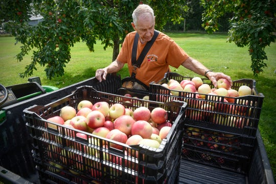 Gary Menke places freshly-picked apples into crates Monday, Sept. 3, at Hidden Cove Orchard.