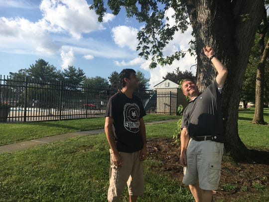 Amol Polke, left, and Clinton Robertson inspect a tree near the Cavalier Country Club Apartments where lightning came down before striking a lifeguard at the pool, seen in the background.