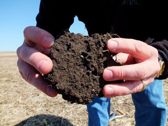 Healthy soil generally looks dark, crumbly, and porous, and is home to earthworms and other organisms. Fisher recommends soil tests at least every four years to learn about factors you can't necessarily see, such as pH and fertility.