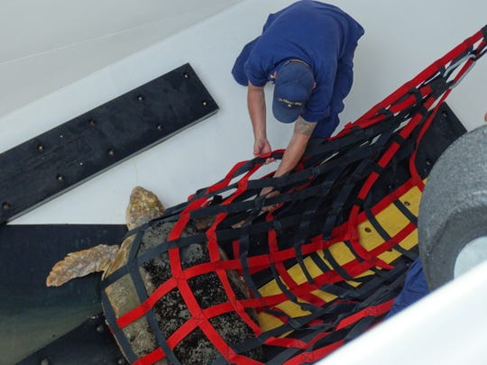 Tammie, an adult Loggerhead sea turtle, is rescued by the U.S. Coast Guard after she was discovered injured off the coast of Cape May.