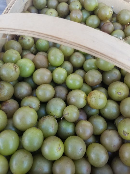 Grapes are available at Asheville area farmers' tailgate markets.