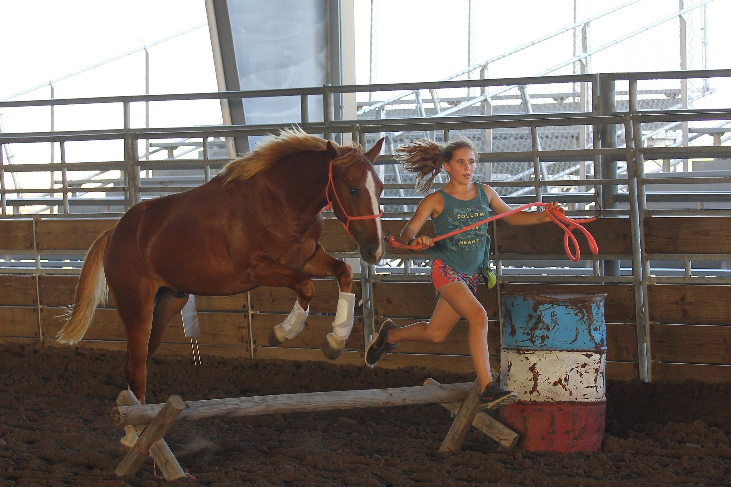 Frances Walsh, 11, trains a young mustang for this week's Extreme Mustang Makeover competition in Fort Worth.