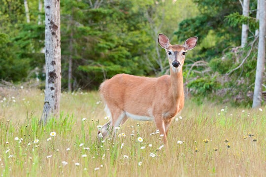 The first deer with a confirmed case of Eastern Equine Encephalitis was found in Winslow.