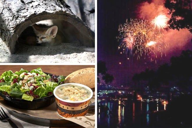 Fennec fox, Zoup!, Riverfest fireworks