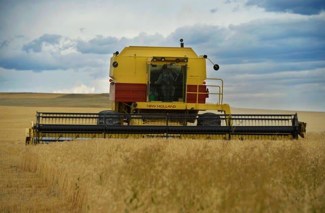 Ralph Paulus cuts wheat on his 100-year old family farm near Choteau.