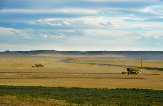 The Paulus family harvests wheat on their 100-year old farm between Dutton and Choteau, recently.