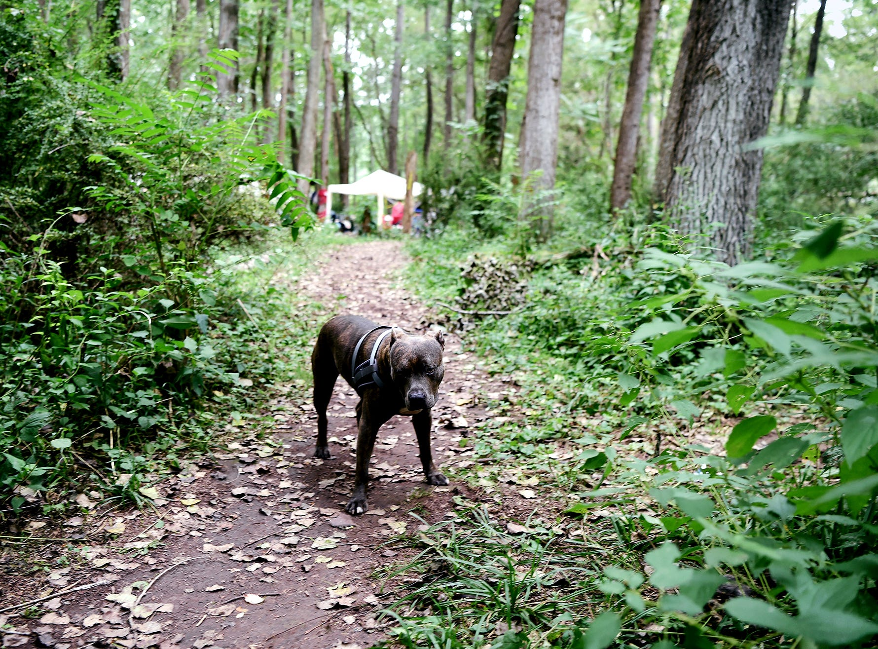 A canine resident of The Jungle in Ithaca on August 31, 2018.