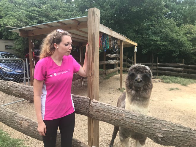 Knoxville News Sentinel reporter Erica Breunlin recently visited Smoky Mountain Llama Treks where people can pet llamas and an alpaca, feed them graham crackers and hike with them into the mountains. Breunlin befriended (or tried to) Peanut Butter the alpaca while at the farm.