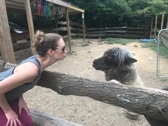 Andrea Breunlin faces off with Peanut Butter the alpaca at Smoky Mountain Llama Treks in Cosby while vacationing in Tennessee over Labor Day weekend.