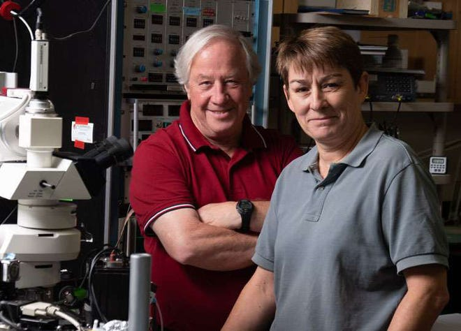 Robert Fettiplace and Maryline Beurg are engaged in research aimed at understanding the proteins that open and close ion channels in mammalian hair cells.