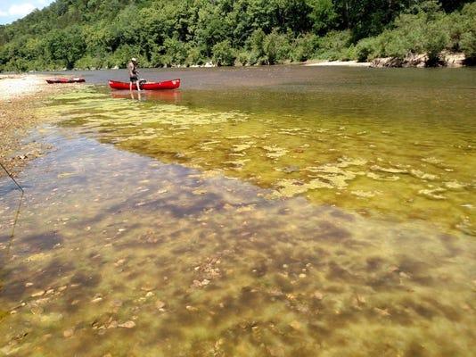Buffalo Algae
