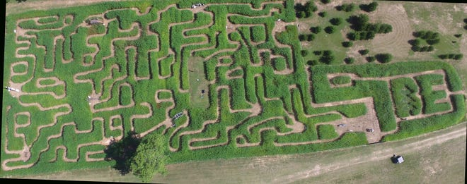 A maze in the shape of Alabama has been carved into sudangrass in Troy.