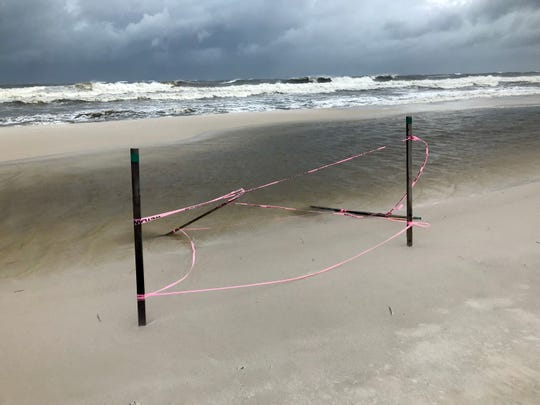 High surf claims a sea turtle nest on Perdido Key as Tropical Storm Gordon churns in the Gulf of Mexico on Tuesday, Sept. 4, 2018.