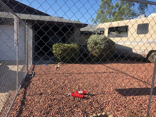 Woman, 4 dogs perish in RV fire