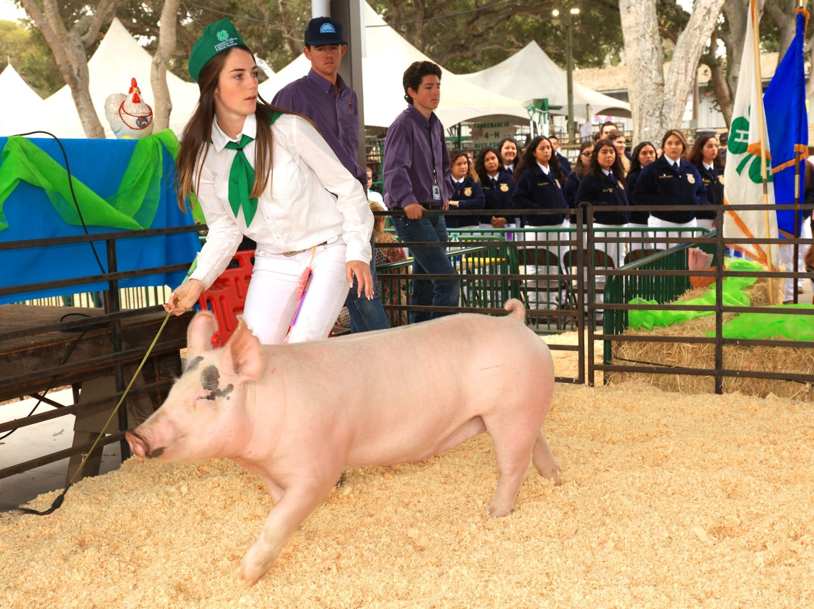 Tory Bradford shows in the 2018 Monterey County Fair Auction.