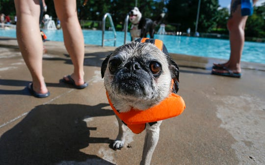 The Park Board's annual Dog Swim is Tuesday, Sept. 3, at Fassnight Pool. Registration in advance is encouraged.