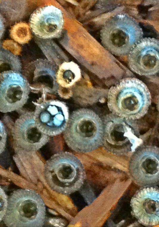 3birds Nest Fungus E Sept 16