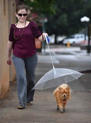 Brittany Teague takes her Pomeranian, Danny, for a walk in the rain Tuesday. He will only go out in the rain if he's under his umbrella-leash and wearing his boots.