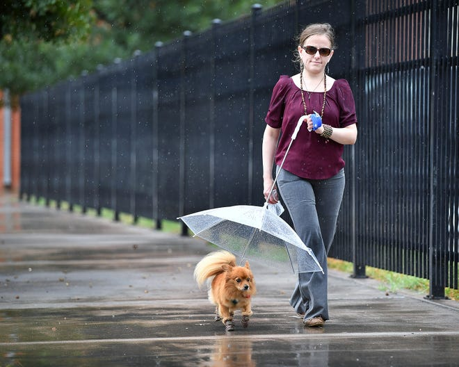 Brittany Teague walks her 6-year-old Pomeranian, Danny, in a light rain Tuesday afternoon. Danny dislikes getting wet, so Teague bought him boots and a clear umbrella-leash combination.
