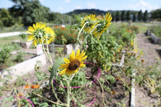 Restoration Park on Muskingum Avenue in Zanesville will host a harvest block party this Saturday.