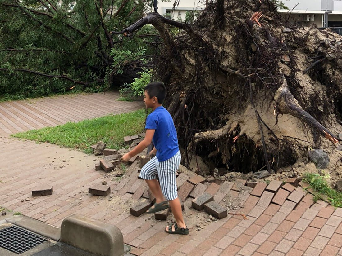 epa06996063 A boy walks past an uprooted tree in Sakai, Osaka suburbs, western Japan, 04 September 2018. Powerful typhoon Jebi made landfall in western Japan disrupting transports due to strong winds and heavy rain.  EPA-EFE/STR ORG XMIT: FRA20